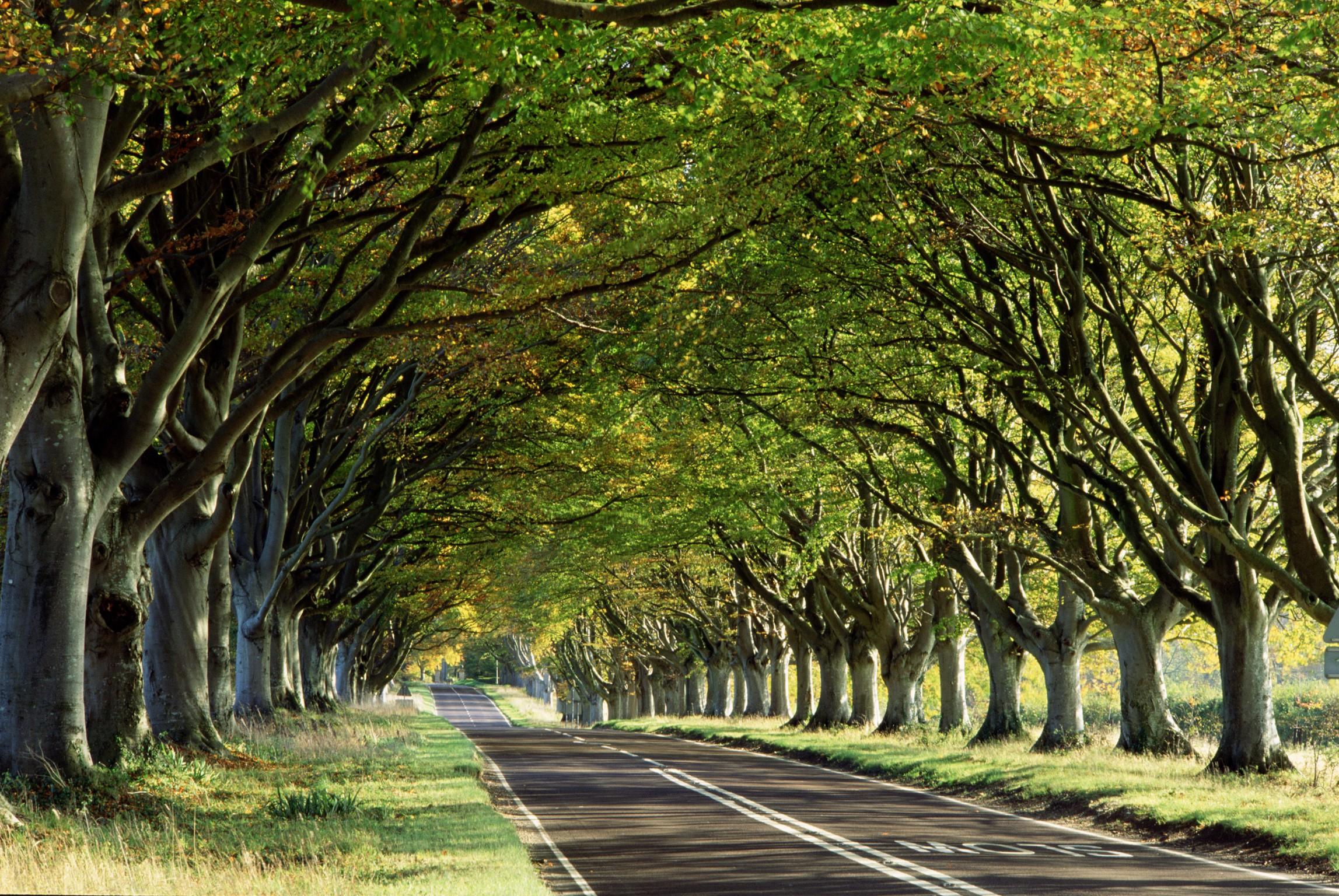 林荫大道摄影图 树木树叶 公路图片高清图片