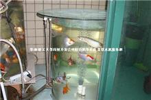 自清过滤生态高氧 鱼池、鱼缸,过滤循坏设备 无腥鱼