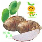 广西桂林荔浦芋