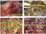廣州市廢銅回收公司從往年春節過后價格走勢來看不很樂觀